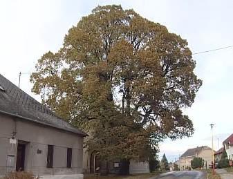 Strom roku 2007