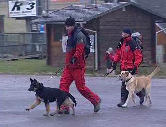 Lavinoví psi