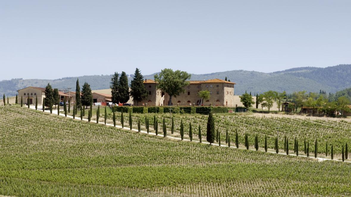 Italská vinice
