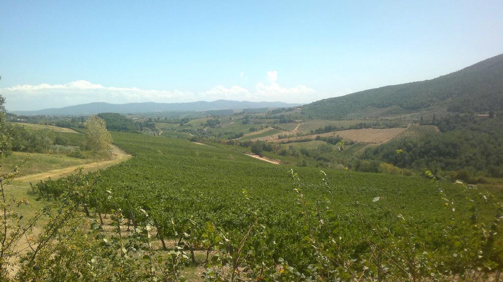 Toskánské vinice