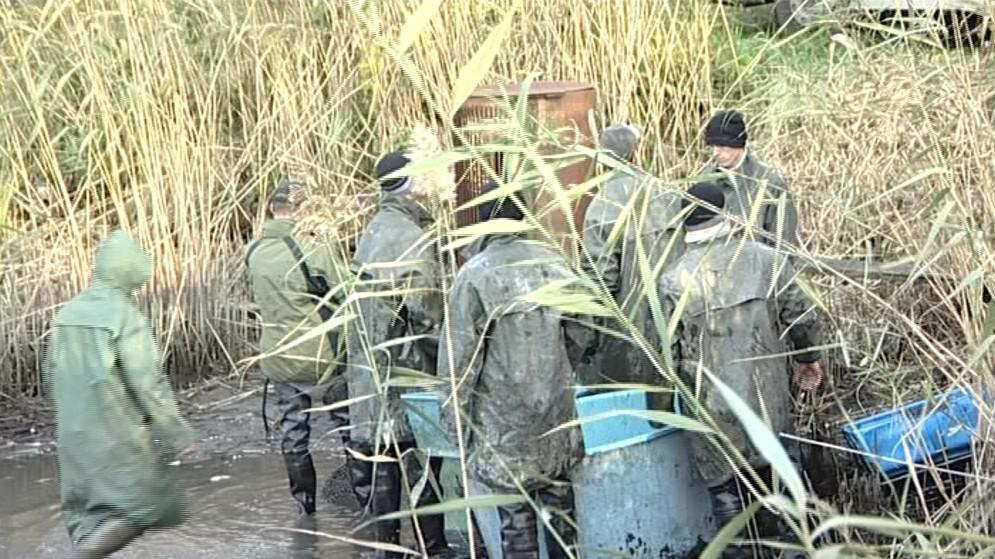 Výlov rybníku Sýpka v Písečné u Lužic