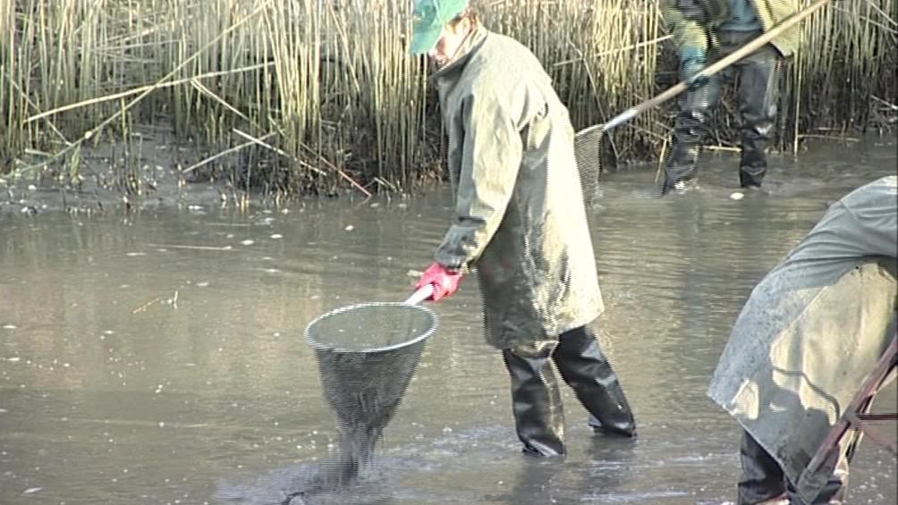 Výlov rybníka