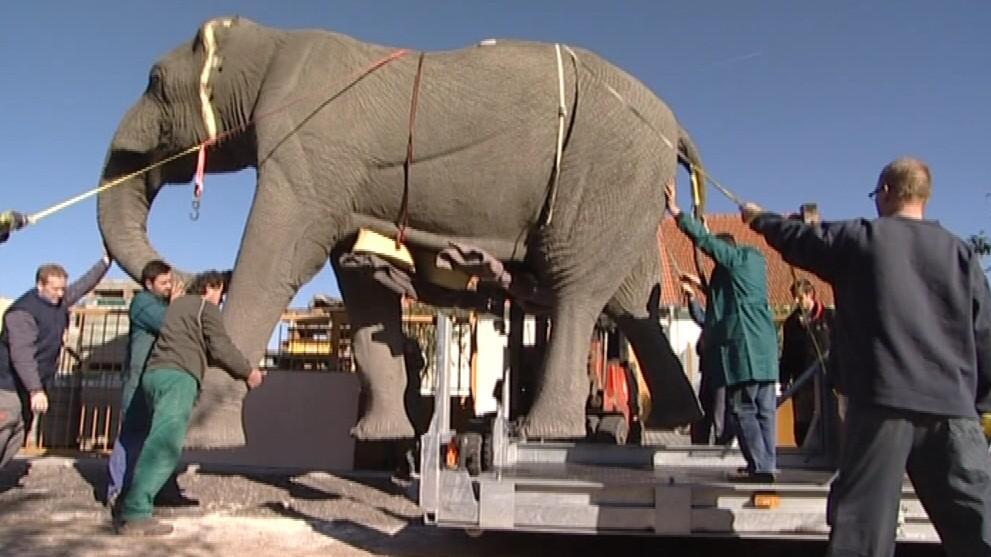 Model slona se dospělým mužům neubrání