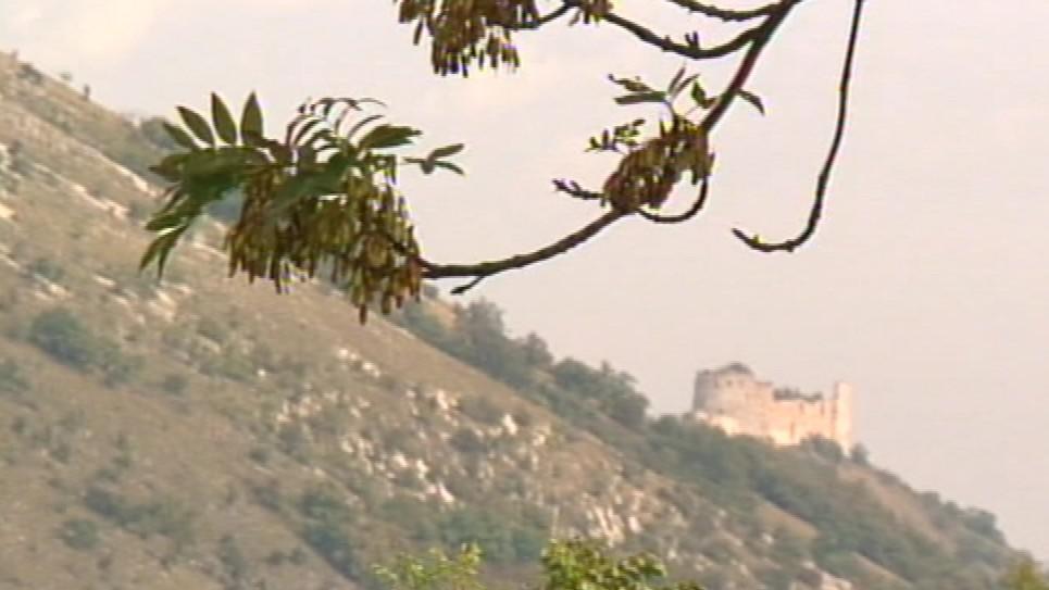 Pajasan žláznatý vytlačuje stromy z Pálavy
