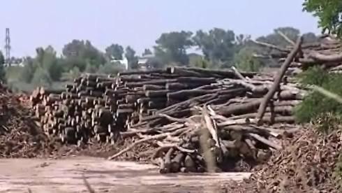 Z klád vznikne po zpracování dřevní štěpka
