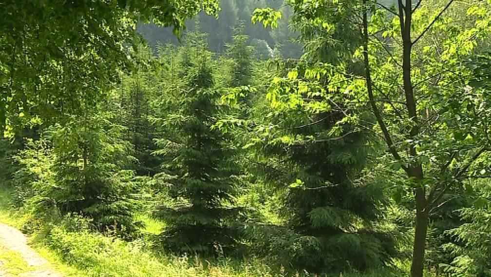 Les, který nesmí jeho majitel kvůli podvodníkům užívat