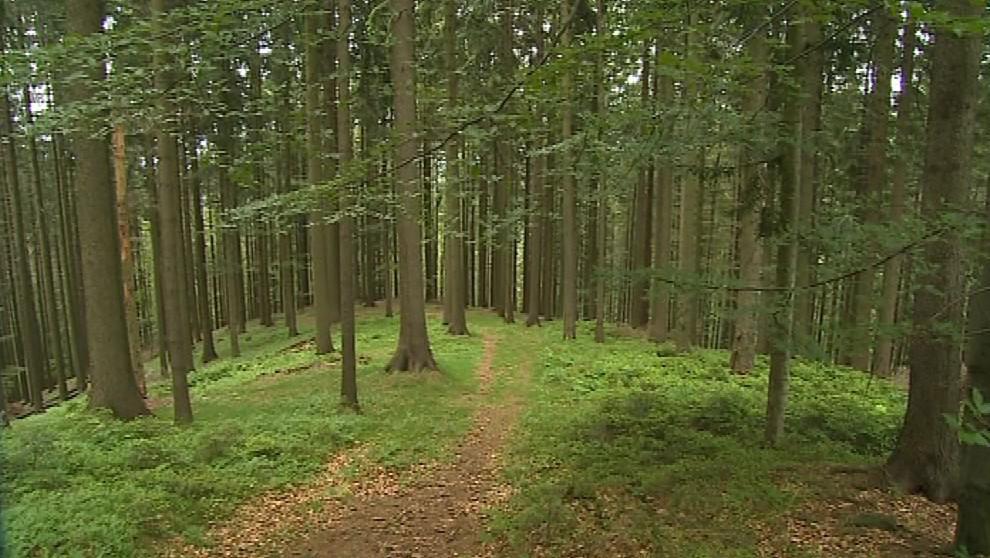Les pana Fárka, který mu prodali podvodníci