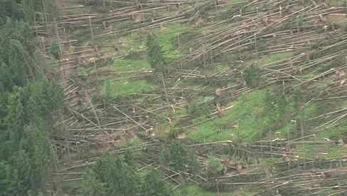 Zničený Masarykův les