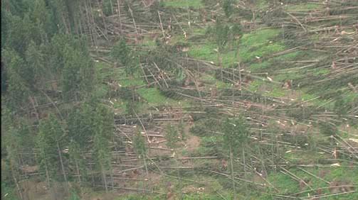 Kalamita lesa na Blanensku