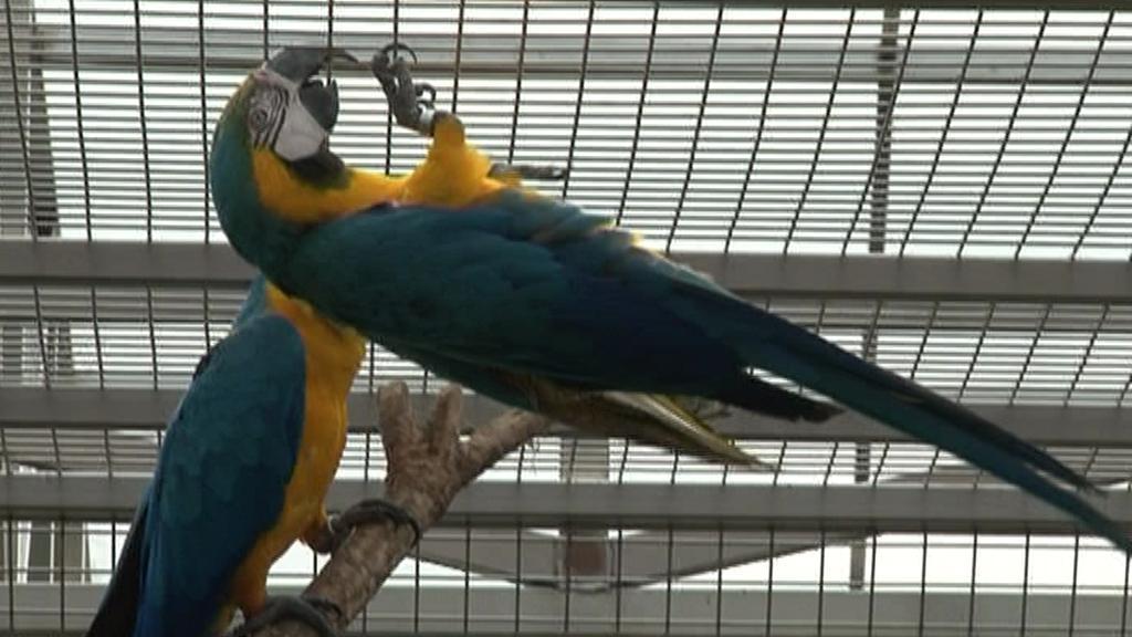 Papouščí zoo