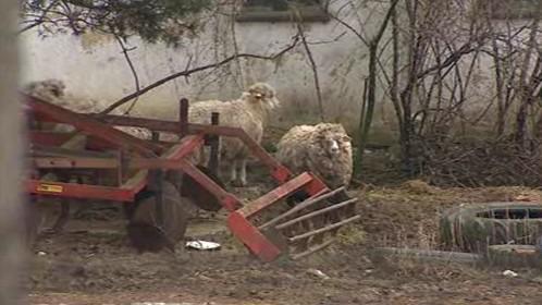 Zvířata na farmě v Břestku žila v nevyhovujících podmínkách