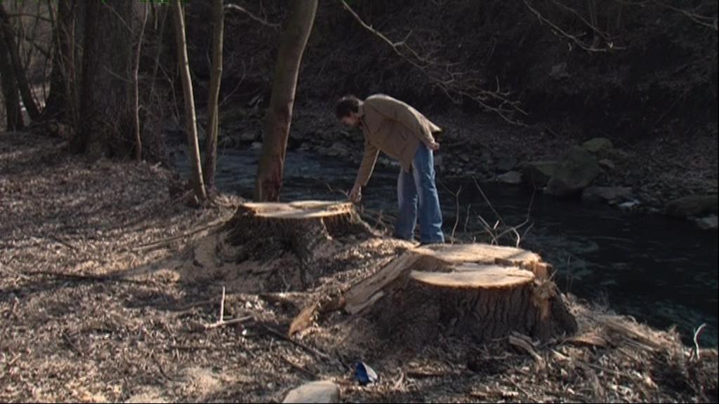 Povodí Moravy vykácelo více stromů, než mělo povoleno