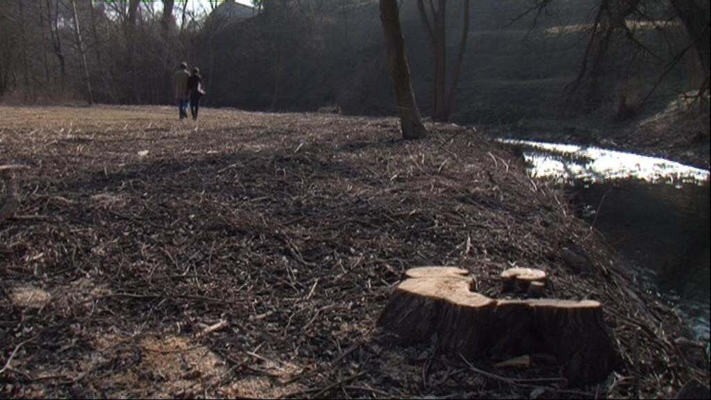Povodí Moravy vykácelo stromy kolem Rokytné