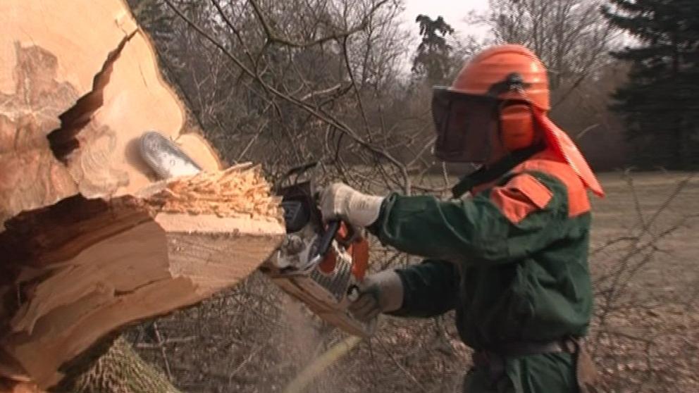 Kácení dřevin v Lednici