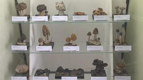 Makety hub v houbařské poradně