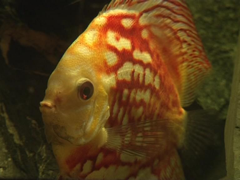 Stálá akvarijní výstava