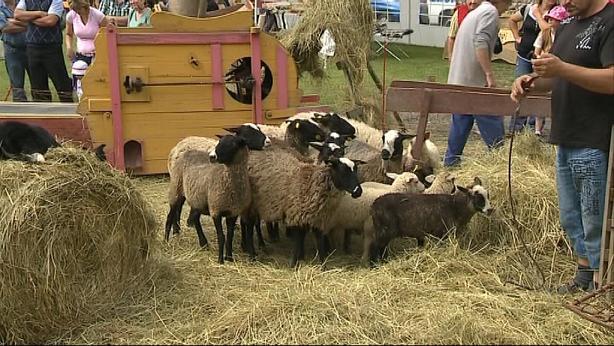 Dnešek v Prlově patřil ovcím
