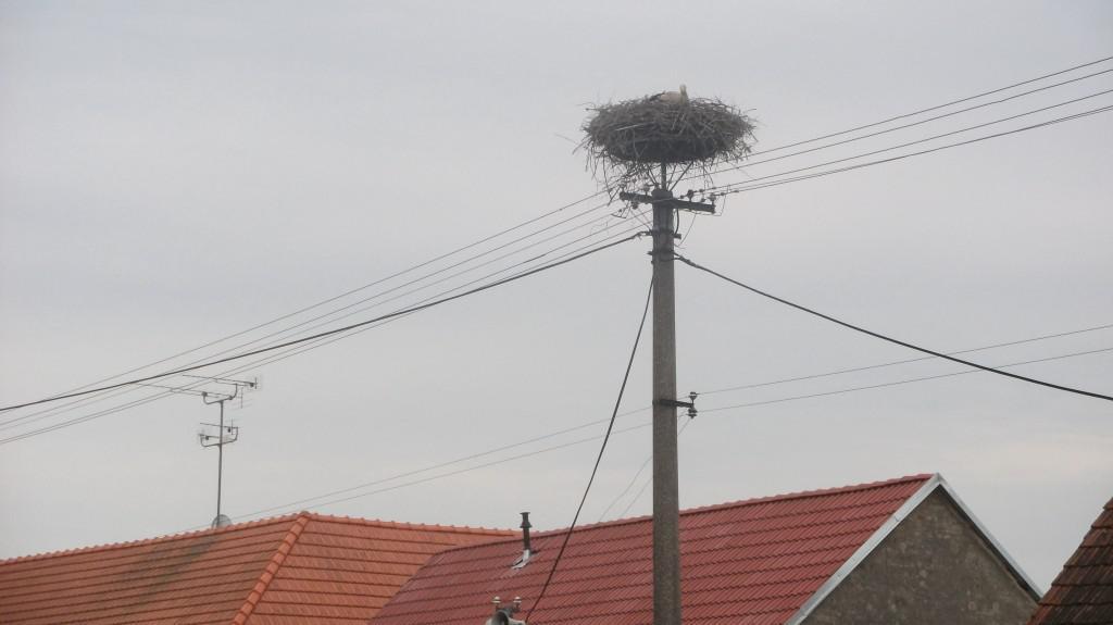 Čapí hnízdo čeká stěhování