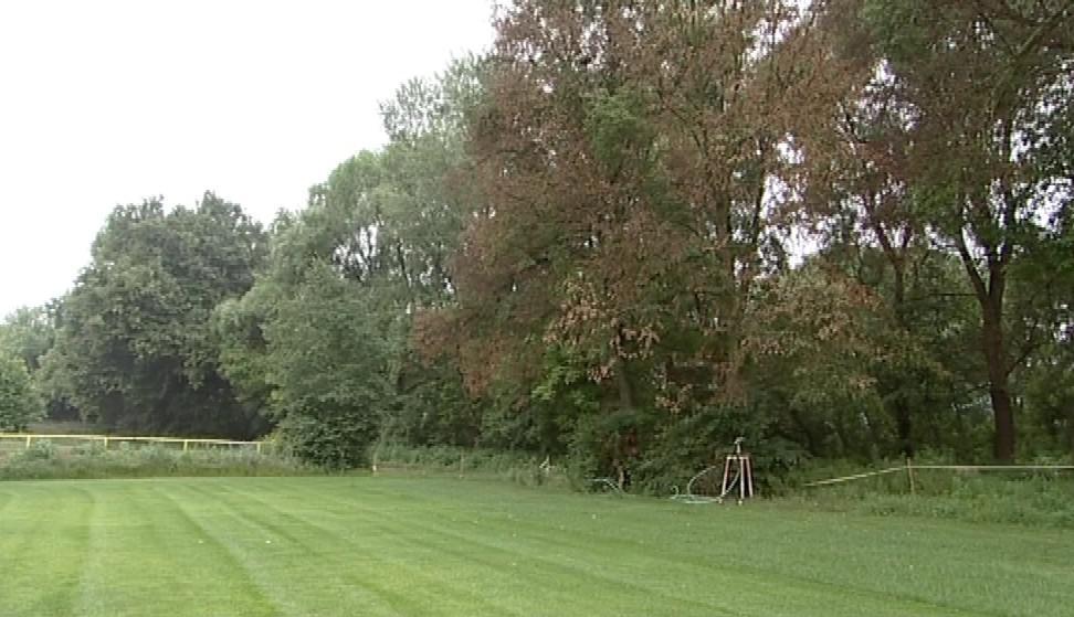 Lípy bránily v rozšíření hřiště