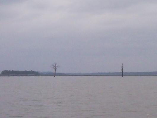 Stromy uprostřed novomlýnských nádrží
