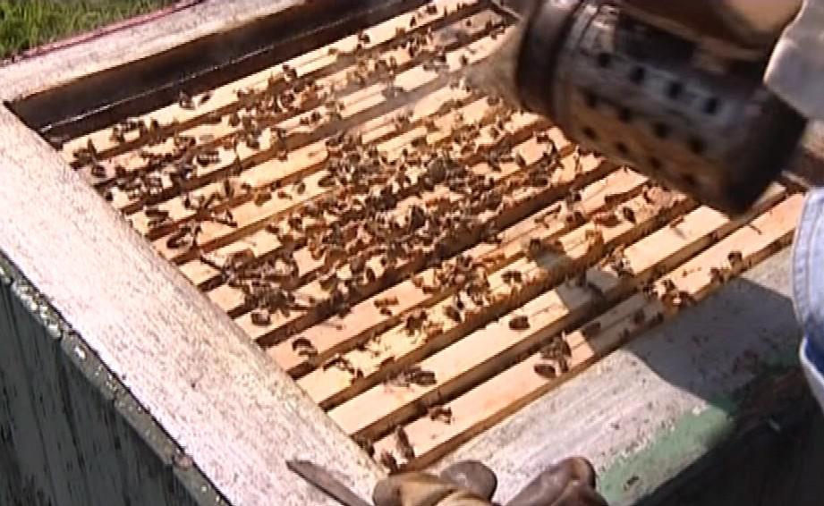Nemocné včely