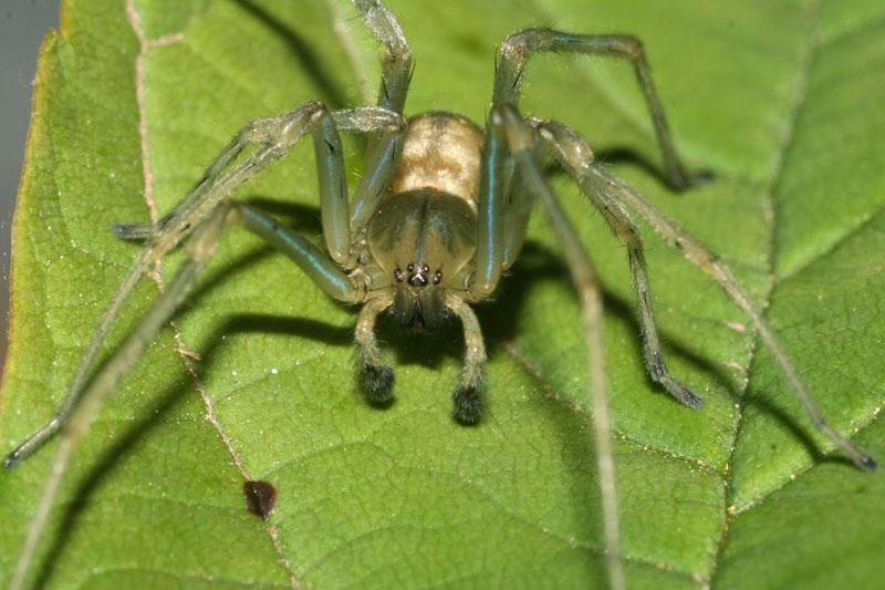 Exotický pavouk