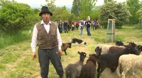Na stádo ovcí se na kopec Rochus přišly podívat desítky rodin