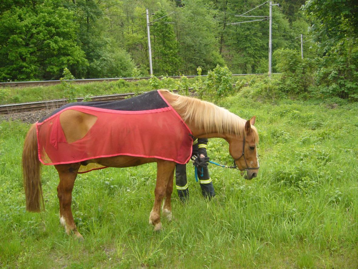 Zachráněný kůň nemá žádné zranění
