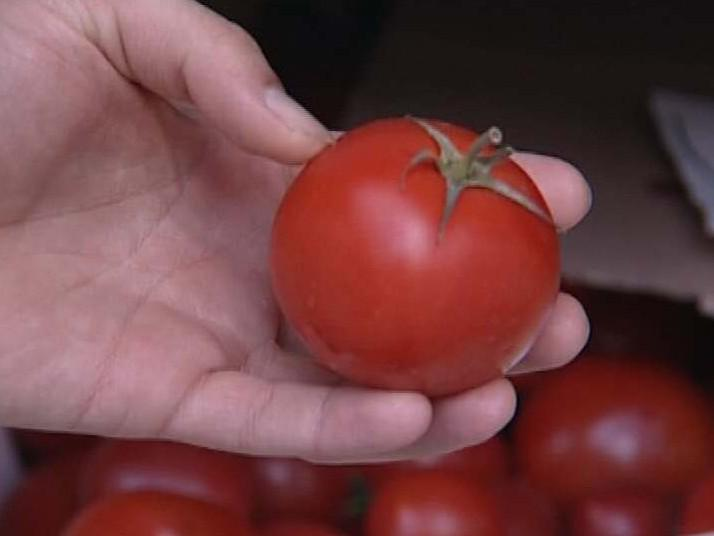 vyhozené rajče freeganům poslouží