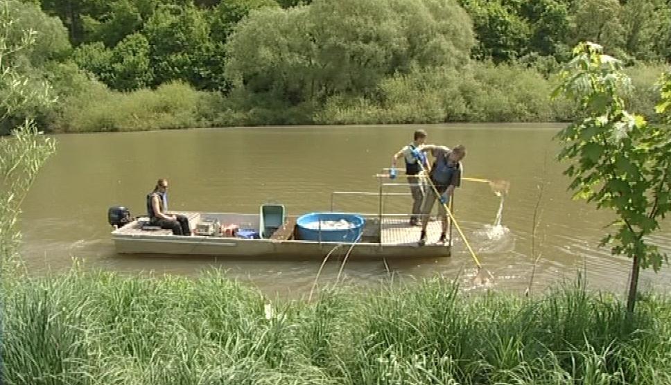 Cejny rybáři lovili za pomoci elektrického agregátu
