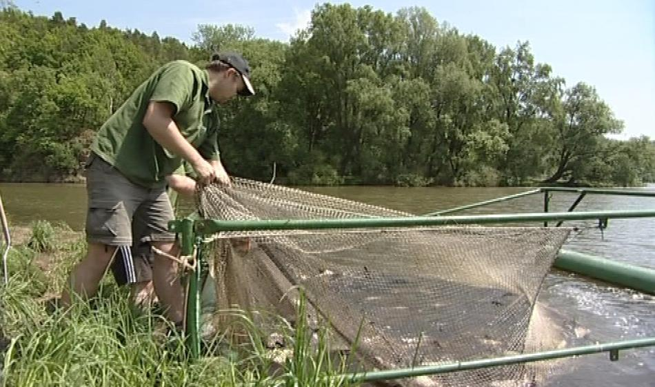 Rybáři při odlovu cejnů z Brněnské přehrady