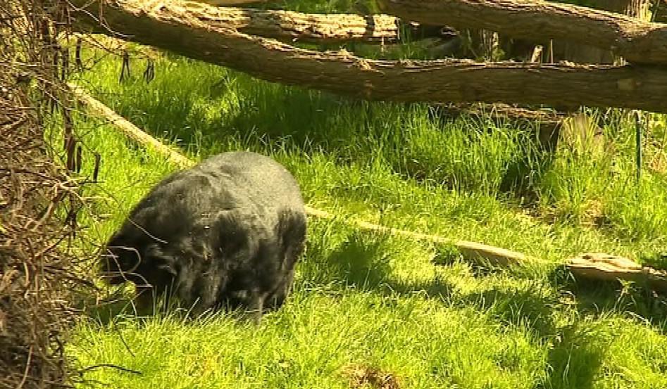 Výběh medvěda ušatého ve Zlíně