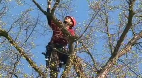 Arborista Martin Vlado při práci na letovické lípě