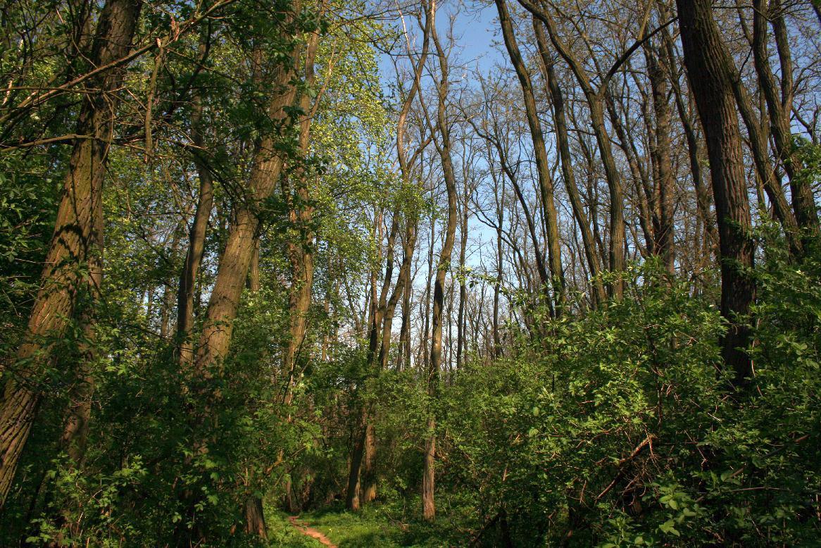 Národní přírodní rezervace Krumlovsko – rokytenské slepence