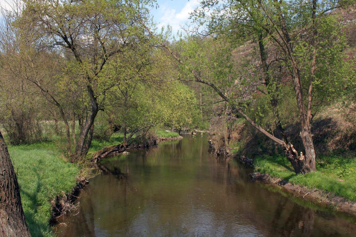 Říčka Rokytná skýtá mnohá zákoutí pro vodní živočichy