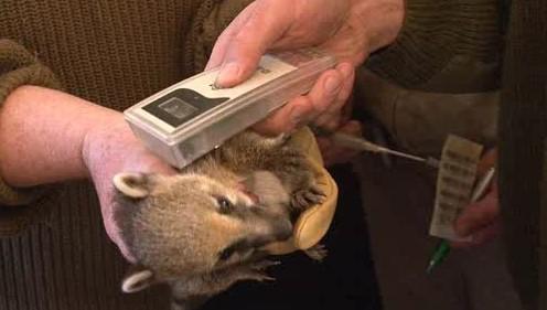Malý nosál u veterináře