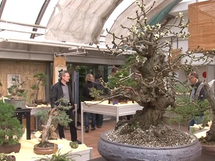 Výstava bonsají v botanické zahradě