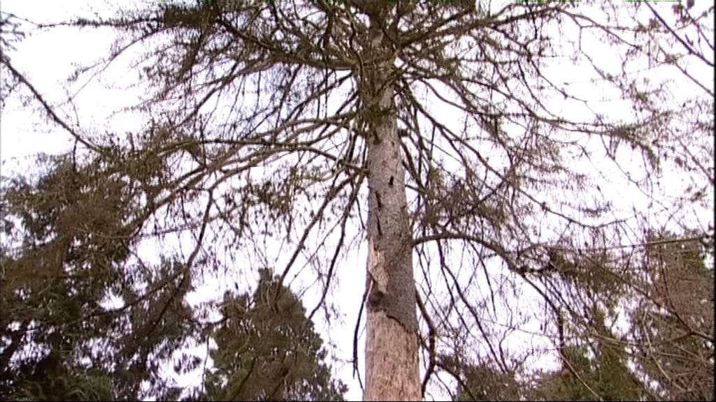 Stromy jsou domovem pro chráněné brouky