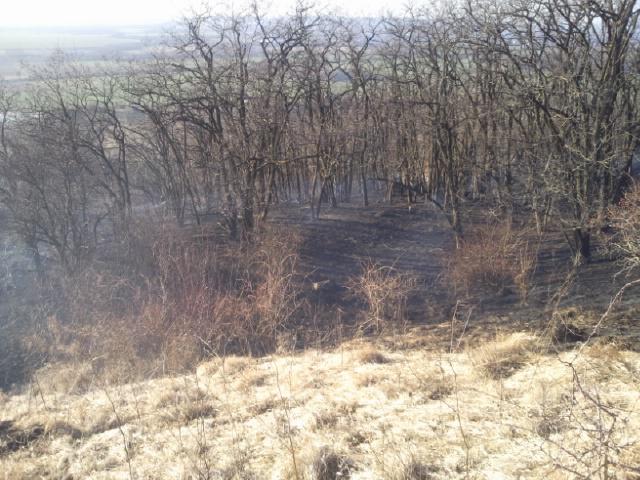 Rozsáhlý požár trávy u Židlochovic