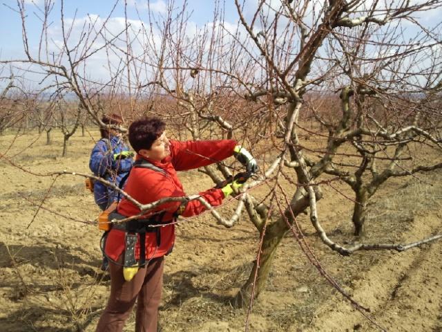 I starší stromy potřebují pravidelnou údržbu