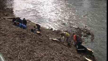 Skauti v Brně se pustili do čištění břehů SVratky