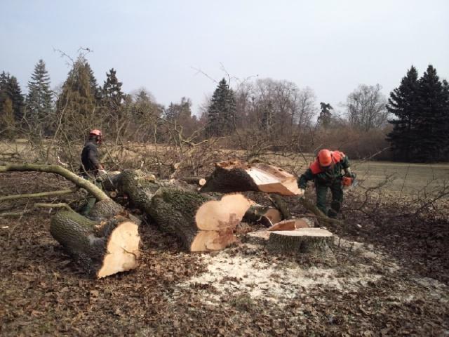 V Lednici zahájili revitalizaci zámeckého parku