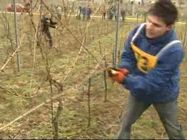 Vinaři soutěžili v řezu vinohradu