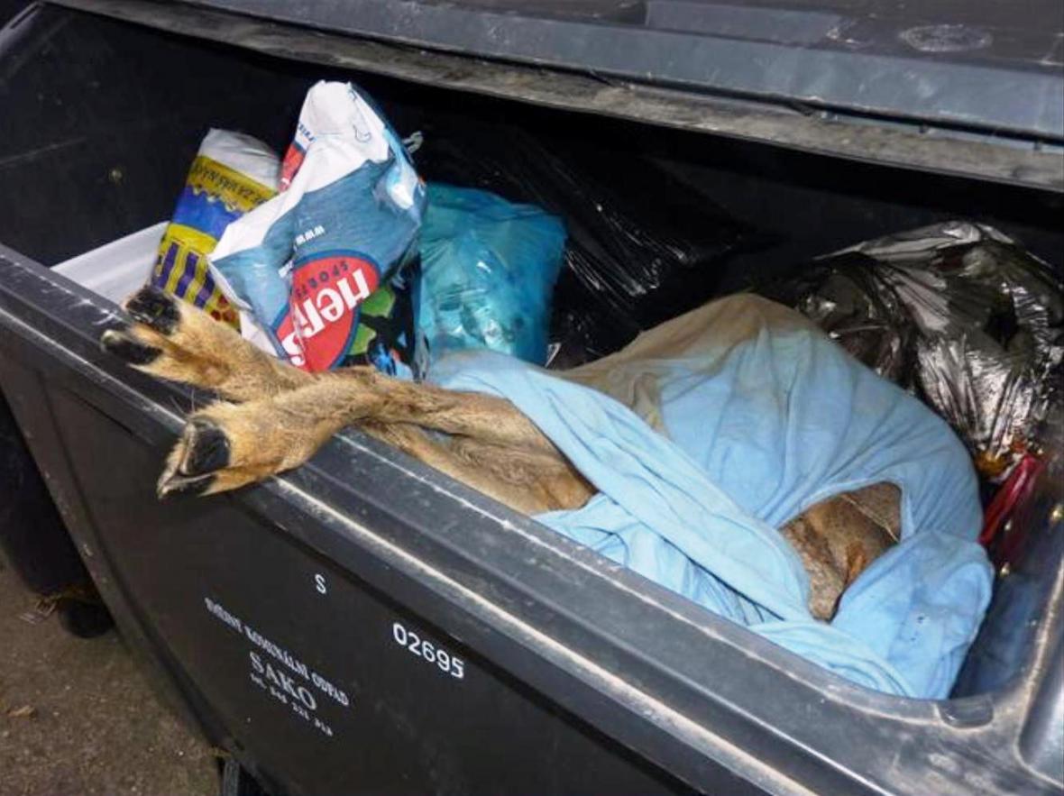 V kontejneru pro domovní odpad byla mrtvá srna