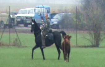 Odchyt býka