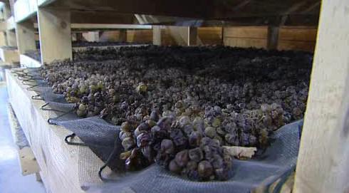 Vinaři začínají lisovat slámové víno