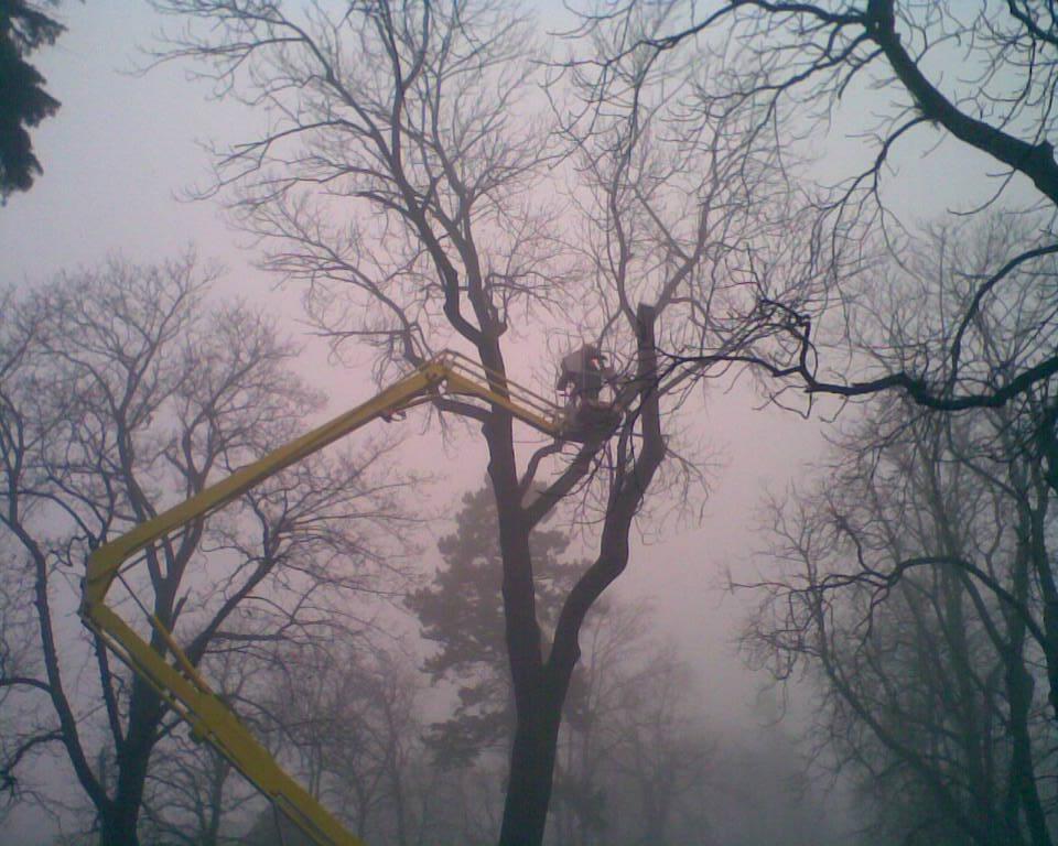 Nemocné kaštany ze znojemského parku zmizí