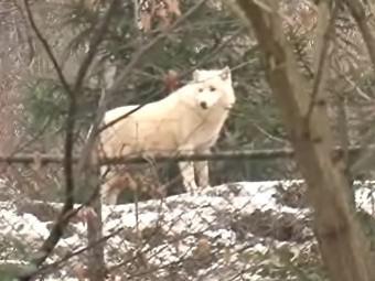Zvířata v brněnské zoo