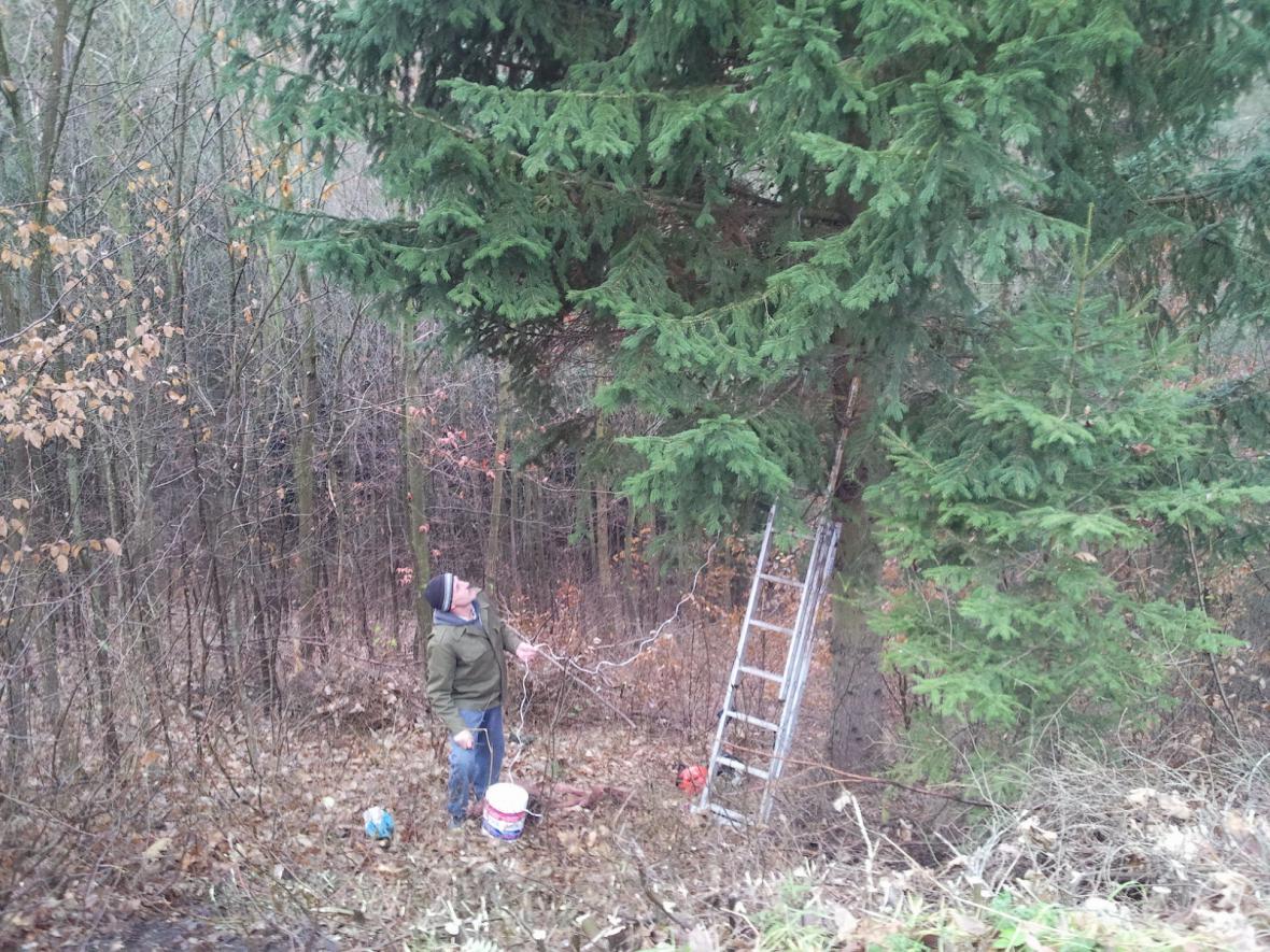 Lesníci se připravují na skácení smrku