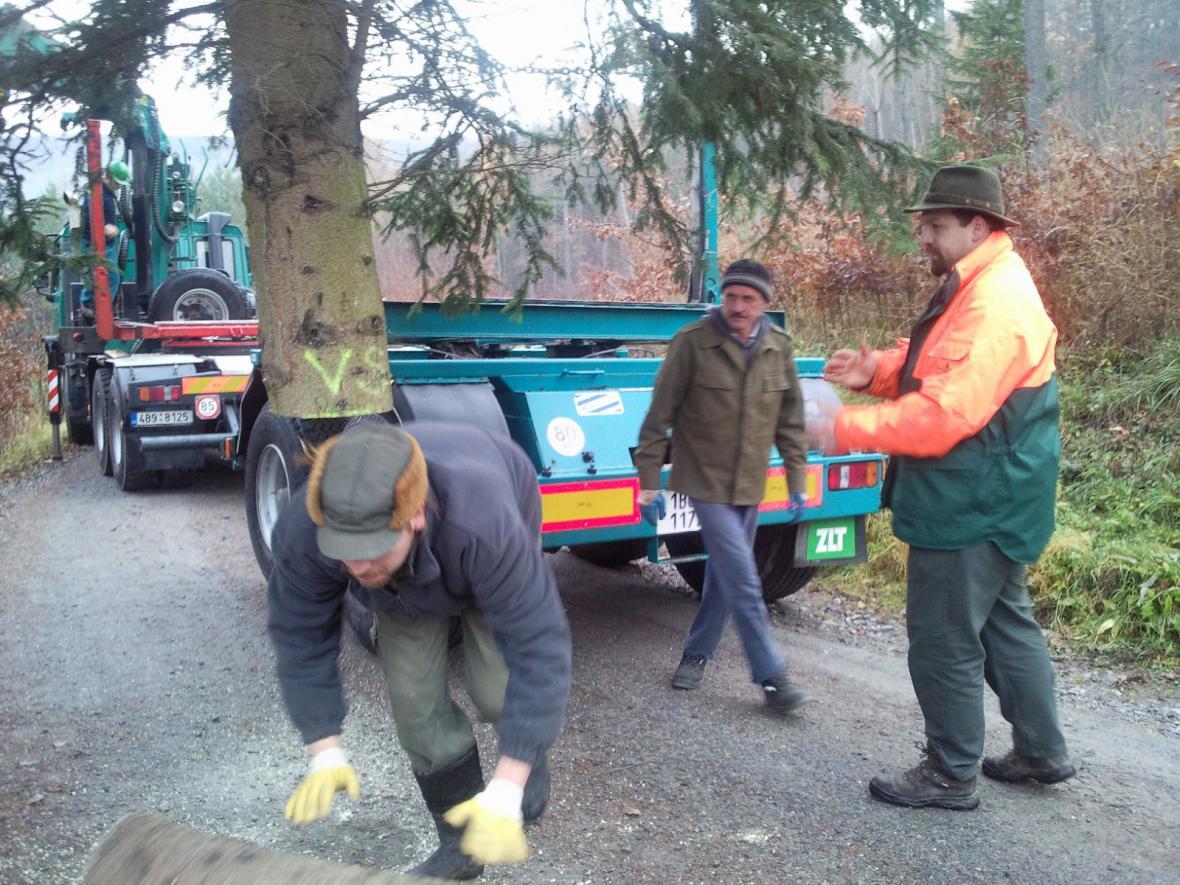 Lesníci nakládají smrk na nákladní automobil